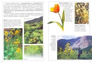 Растения Кыргызстана